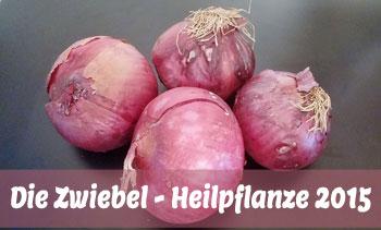 zwiebel-heilpflanze-2015