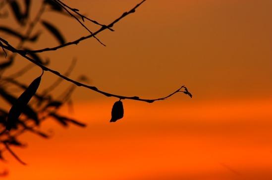 silhouette-251693_640